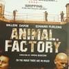 Gledaj Animal Factory Online sa Prevodom