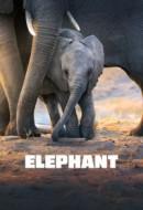 Gledaj Elephant Online sa Prevodom